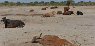 Climate change takes a toll on agricultural production